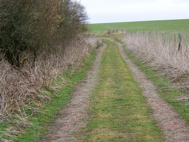 Footpath, Cow Down Hill