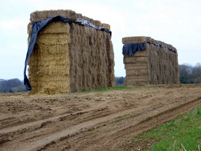Straw bales, East Chase Farm