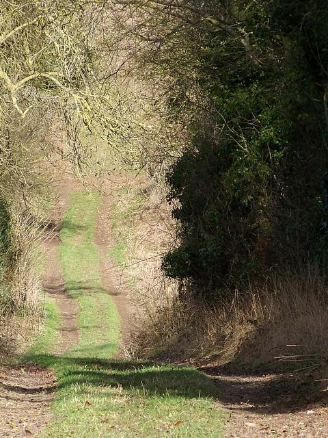 Bridleway near Chettle