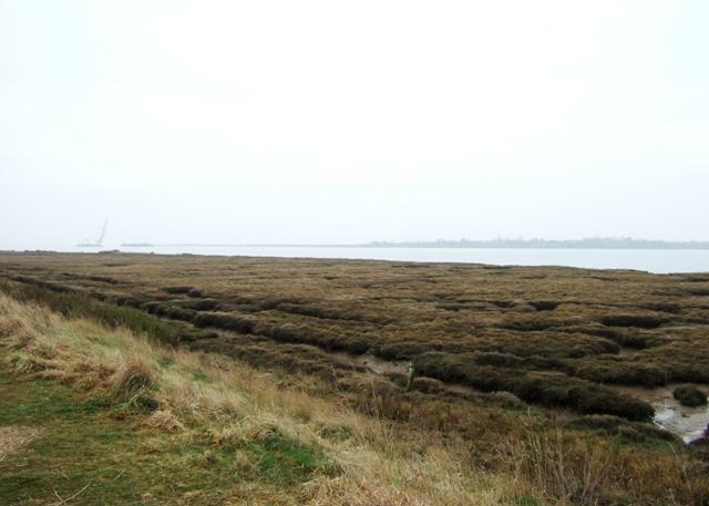 Estuarine marsh, river Colne