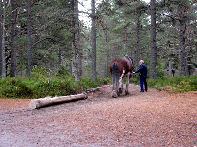 Carrbridge: heavy working horse at the Landmark Forest Theme Park