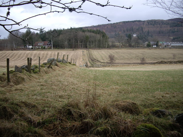 Fields between Kynoch plantation and Moss-side