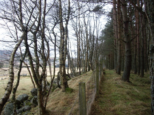 Boundary fence and wall