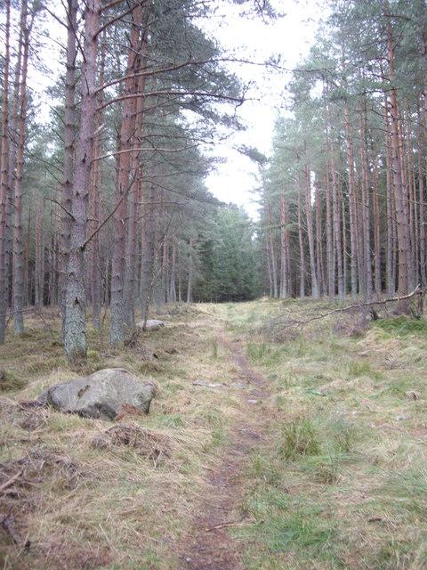 Path through Kynoch plantation