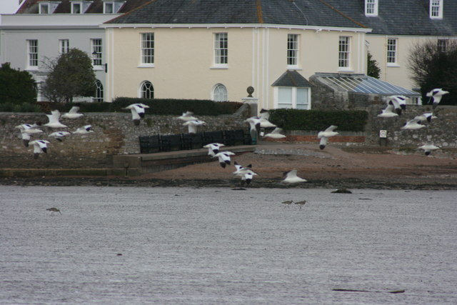 Avocet at Tresillian in Topsham