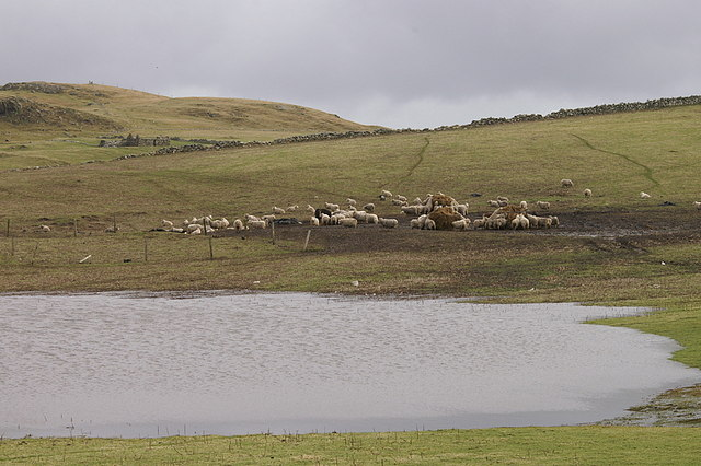 Wet fields behind Lunda Wick