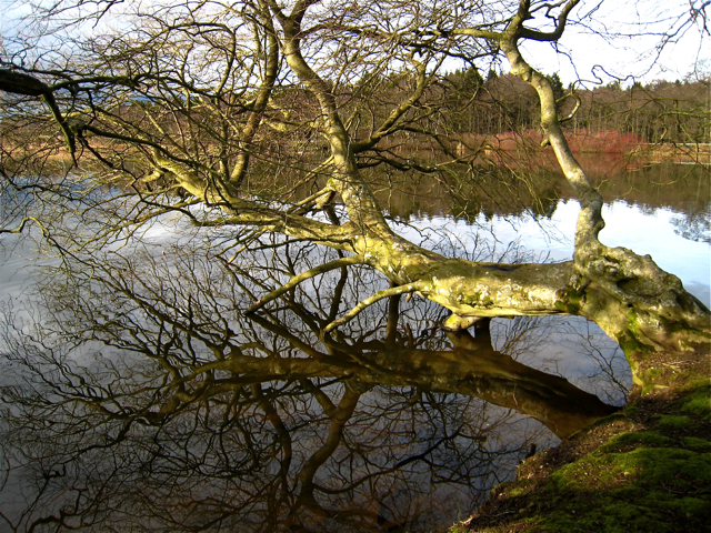 Haddo House: the upper lake