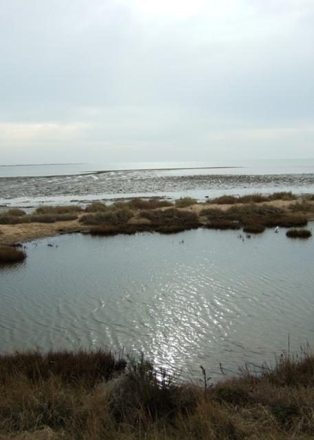 Colne Estuary