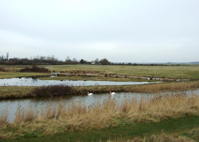 Swans on the Borrowdyke