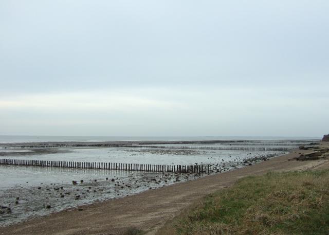 Polders on the Mersea Flats
