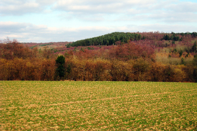 Atkins Wood & Creep Wood