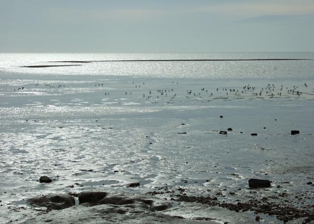 Mud flats, East Mersea