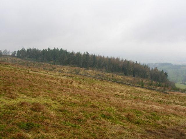 Hookcliffe Plantation