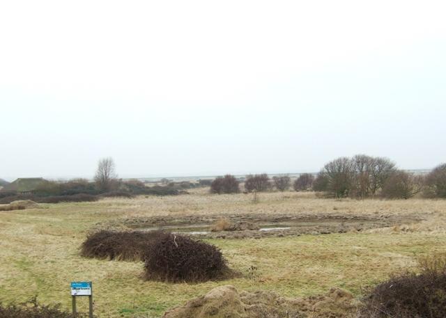 Wetland scrape.
