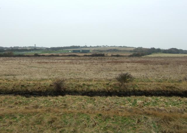 Grassland at Hamford Water