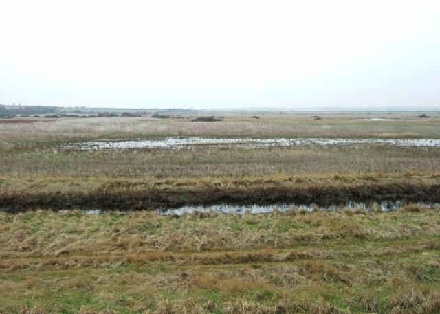 Wet grassland at Walton