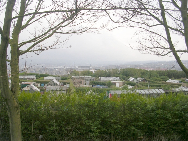 Allotments - Northallerton Road