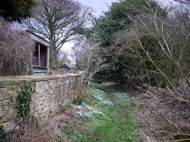 Footpath by garden wall of Dalton House