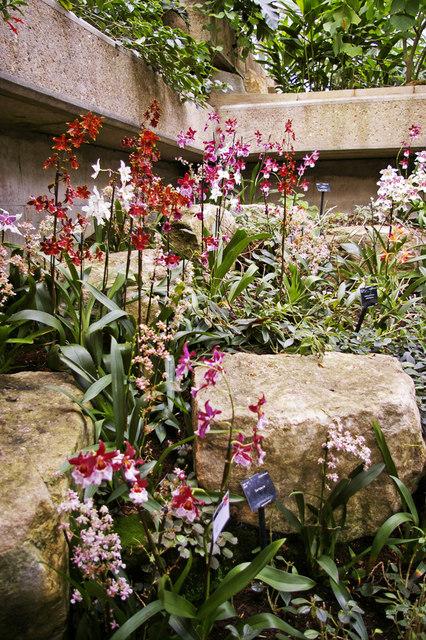 Princess of Wales Conservatory, Kew Gardens, Surrey