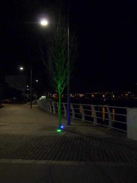 Newport: a tree lit in green