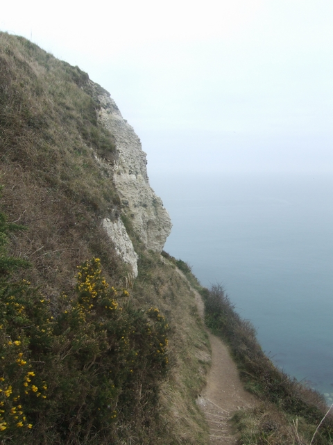 Exposed chalk cliff at Beer Head