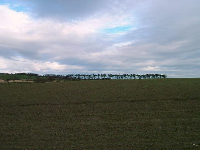 Copse and field near Rennington