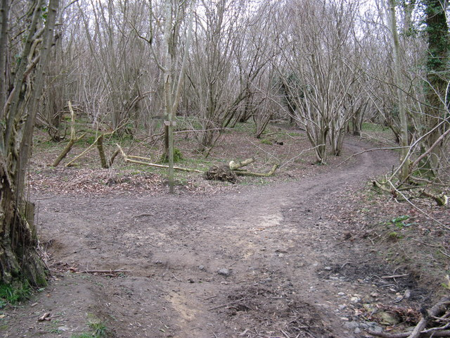 Junction of footpath and bridleway