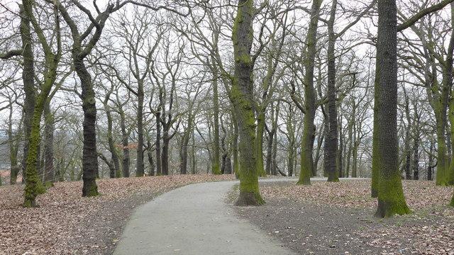 Woods in Grangewood Park
