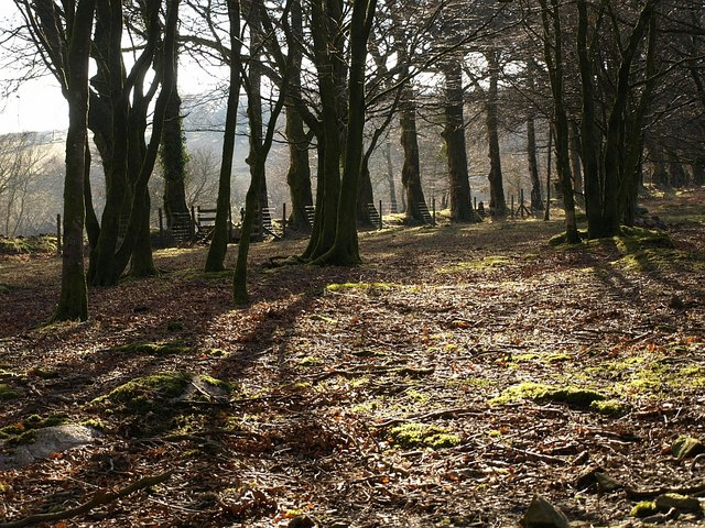 Woodland at Lud Gate