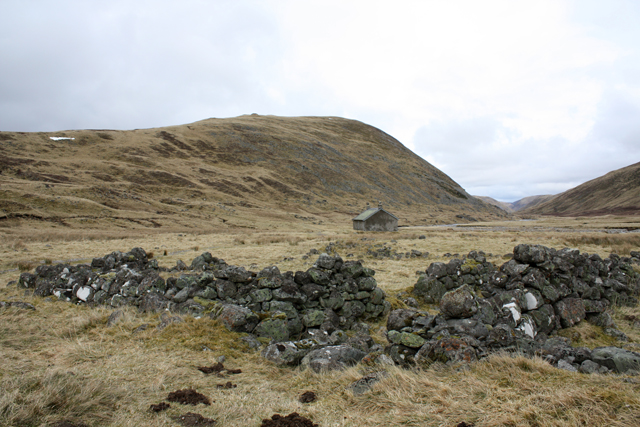 Ruined sheep fank, Dalbeg