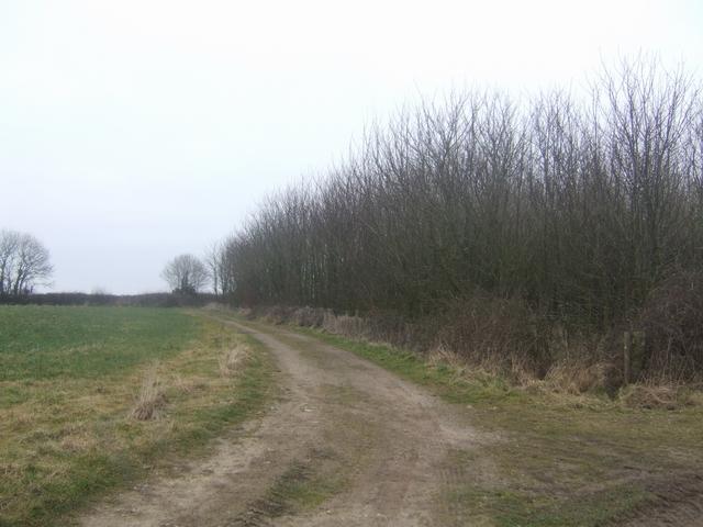 Mare Lane