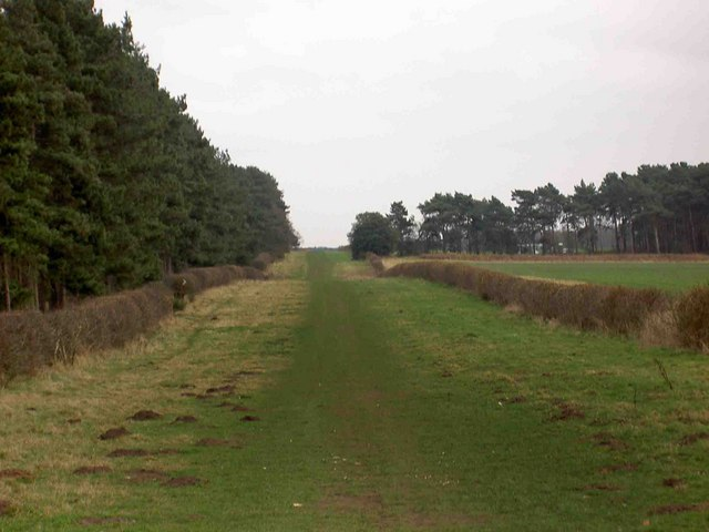 Bridleway to Scofton or the A1