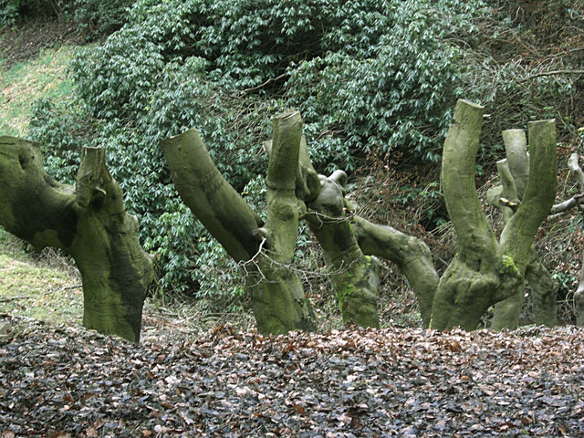 Truncated tree trunks