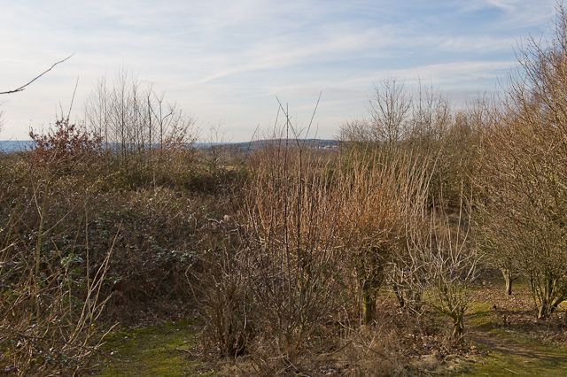 View from Knowle Hill viewing mound, Fair Oak