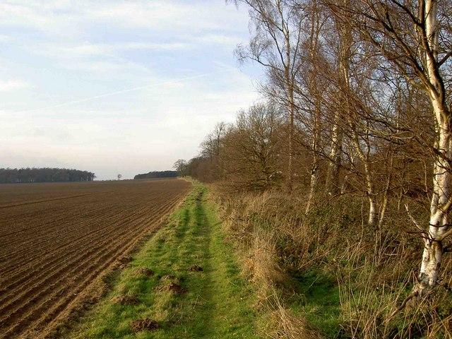 Bridleway alongside Law Hill Wood