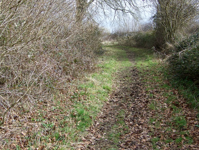 Bridleway, Wiltshire Coppice