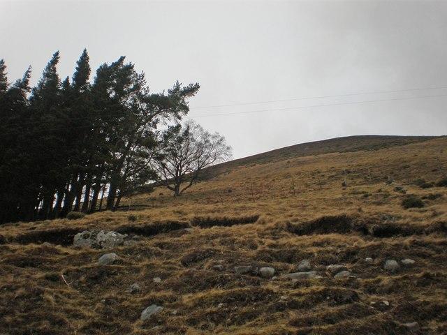 Plantation meets Moorland on Creag Bhinnean