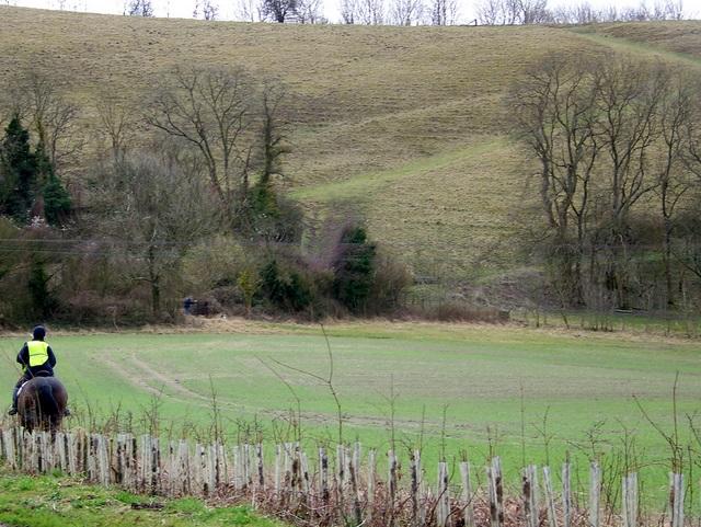 New hedge near Berwick St John