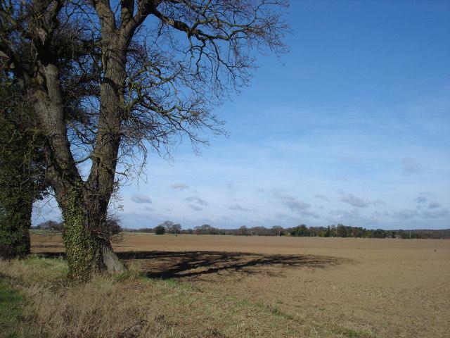 Field off Bucklesham Road