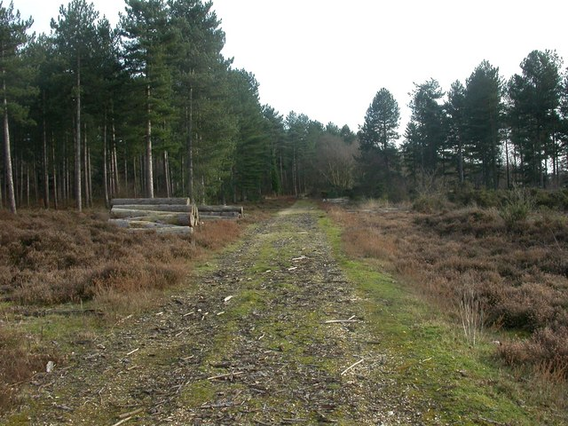 Hurn, forestry track