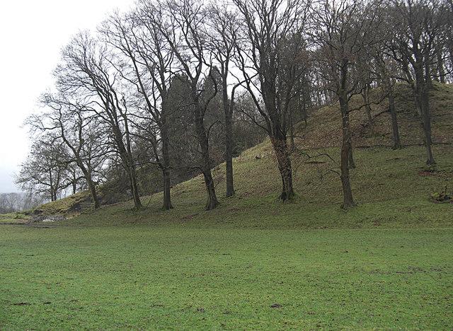 Knoll Wood near Boarsden