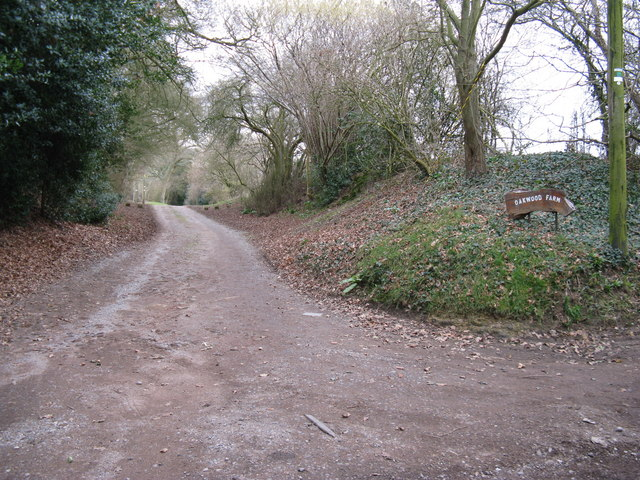 Track to Oakwood Farm