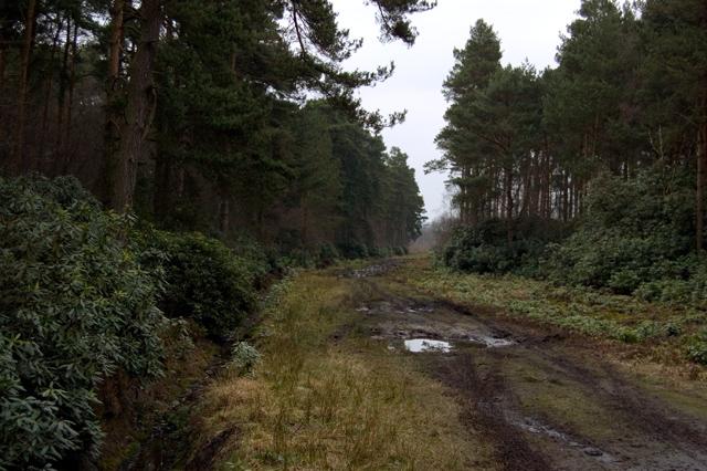 Houghton Moor bridleway