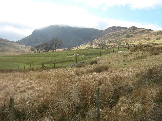 Rough grazing, looking towards Mynydd Moel