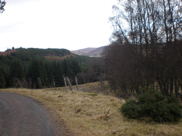 Old Fence Crossing Forest Clearing in Glen Kyllachy