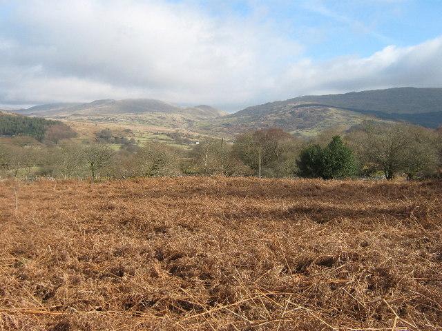 Dead bracken near Ty'n y clawdd