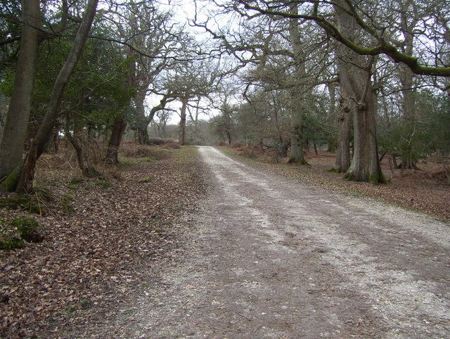 Cycle track in Denny Wood in the New Forest