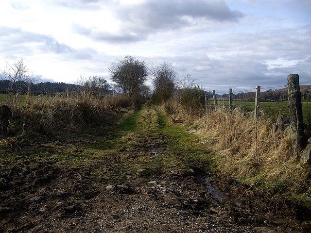 A track towards Mains of Dalhaikie