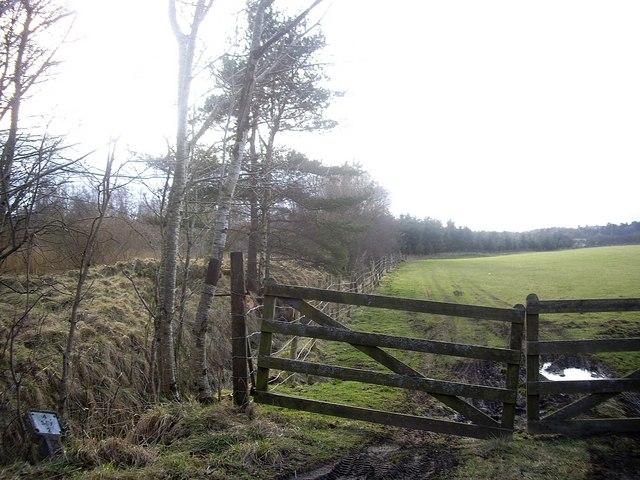Field boundary near Bridgend