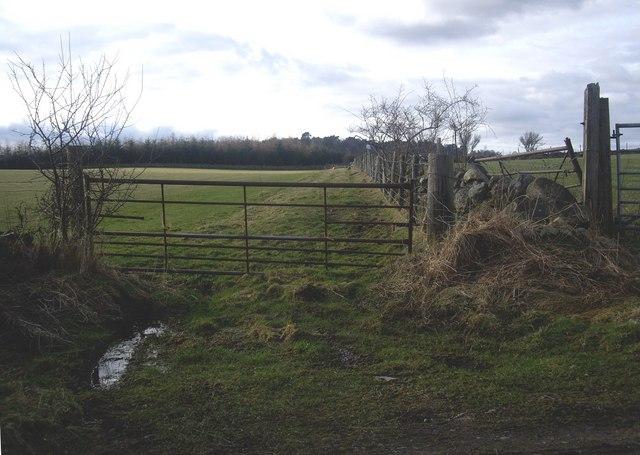 Field boundary near Bridgend cottages